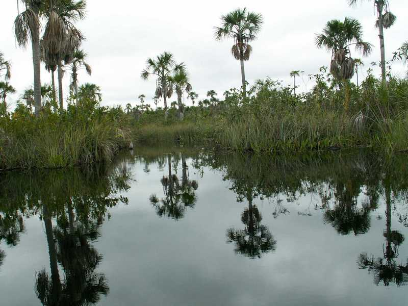 The Awetí live close to the Tuatuari river with its wide fields of the Burití-palm trees