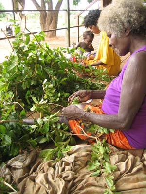 Preparing leaves for dyeing