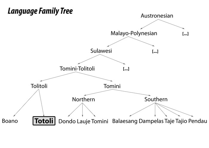 Commonly assumed genetic affiliation of Totoli